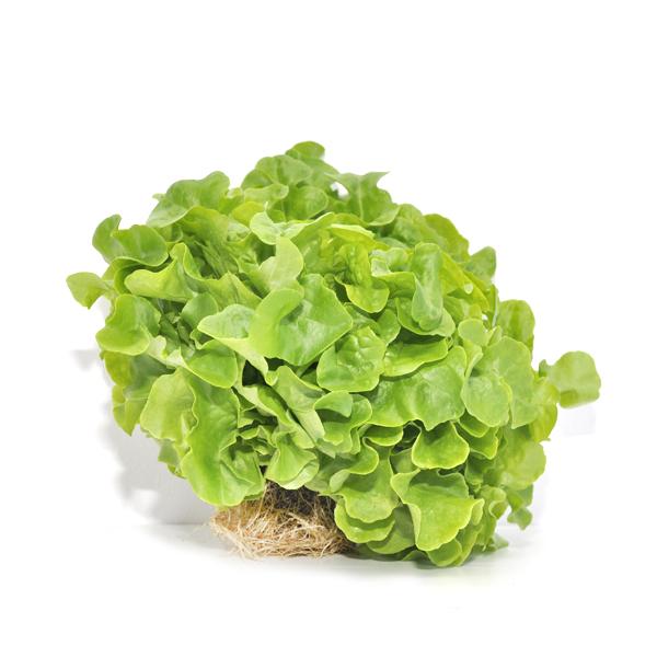 salata batawska